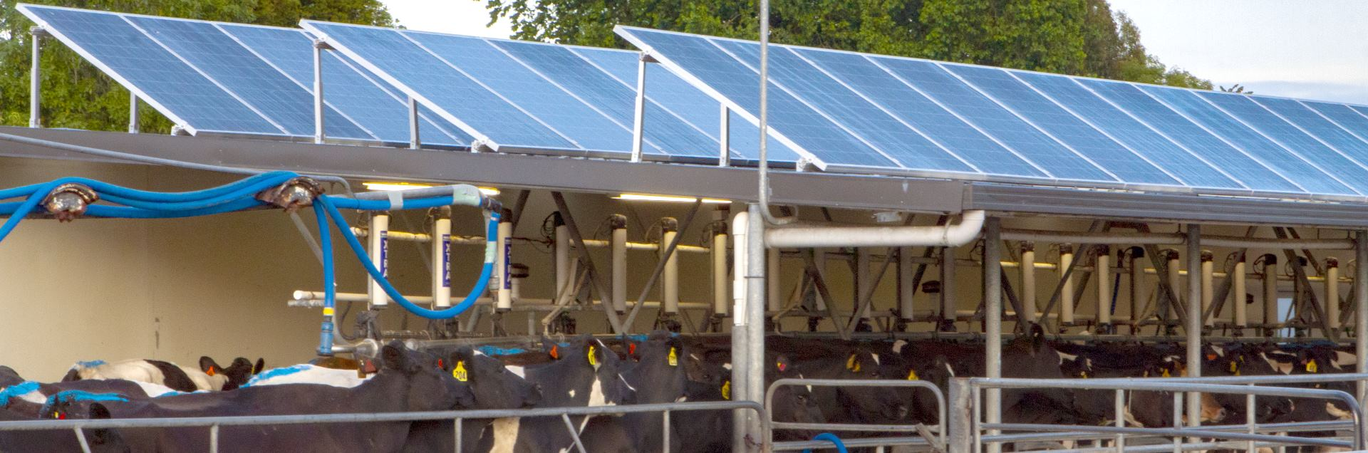 Rural Solar Dairy Case Study - Cow Shed with Solar